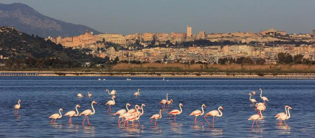 Flamants Roses à Cagliari