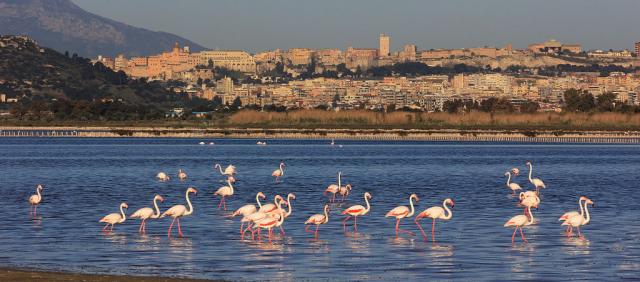 Flamants à Cagliari