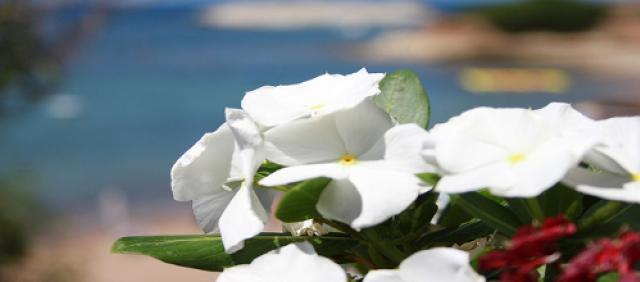 Fleurs en Sardaigne