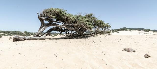 Dunes des plages de Piscinas