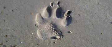 IMG Vacances avec votre chien en Sardaigne – Plages et hébergements