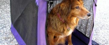 IMG En ferry pour la Sardaigne avec un chien ou autres animaux