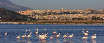 IMG Flamants en vol - Quand la Sardaigne se teint en rose
