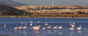 IMG Les oiseaux en Sardaigne – Où les observer