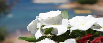 IMG Vacances en Sardaigne – Conseils pour les voyages de noces