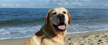 IMG Les meilleures plages 2018 pour les chiens en Sardaigne