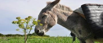 IMG Randonnées avec des ânes en Sardaigne – Toutes les infos